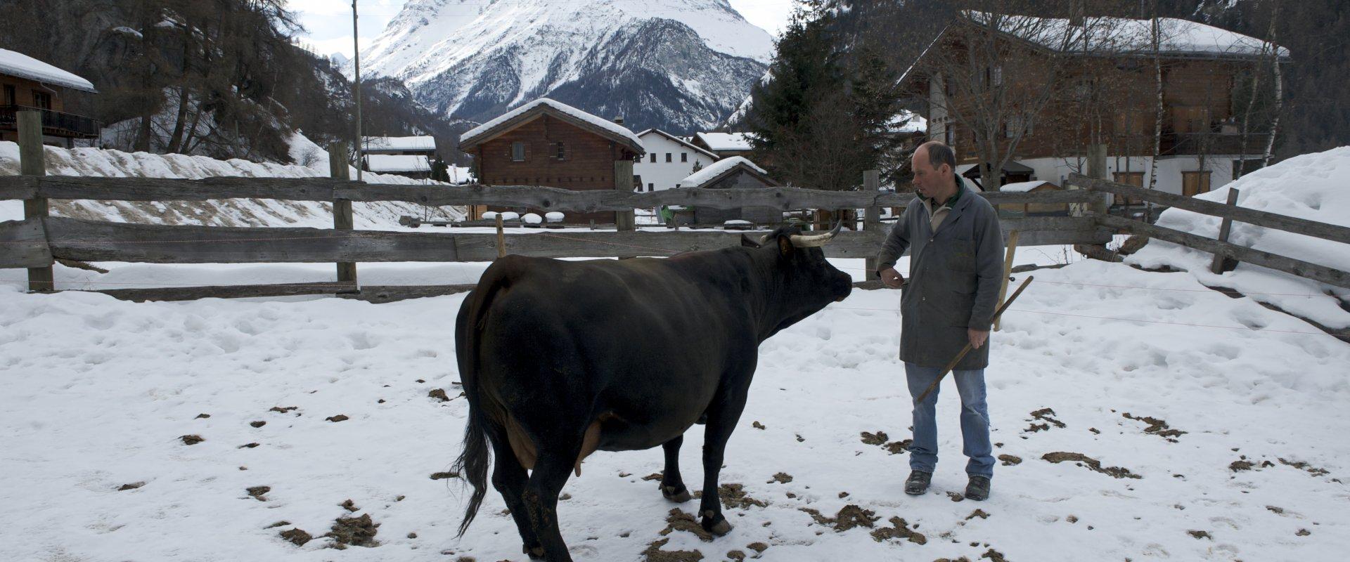 Agriculture de montagne