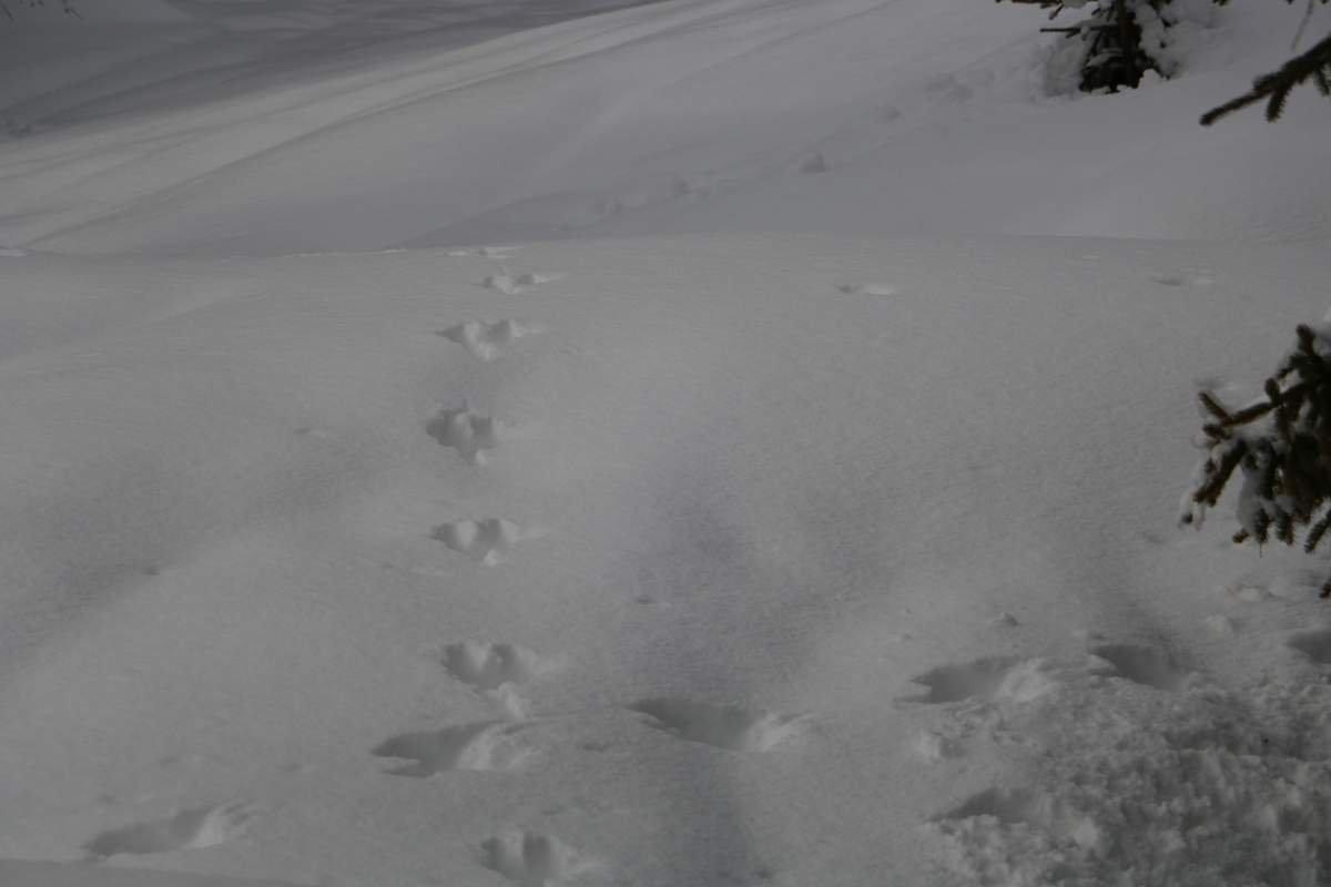 Sur les traces des animaux | De Molignon à La Forclaz