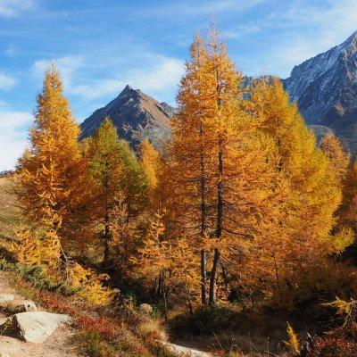 Offre d'automne -  Appartement ou chalet