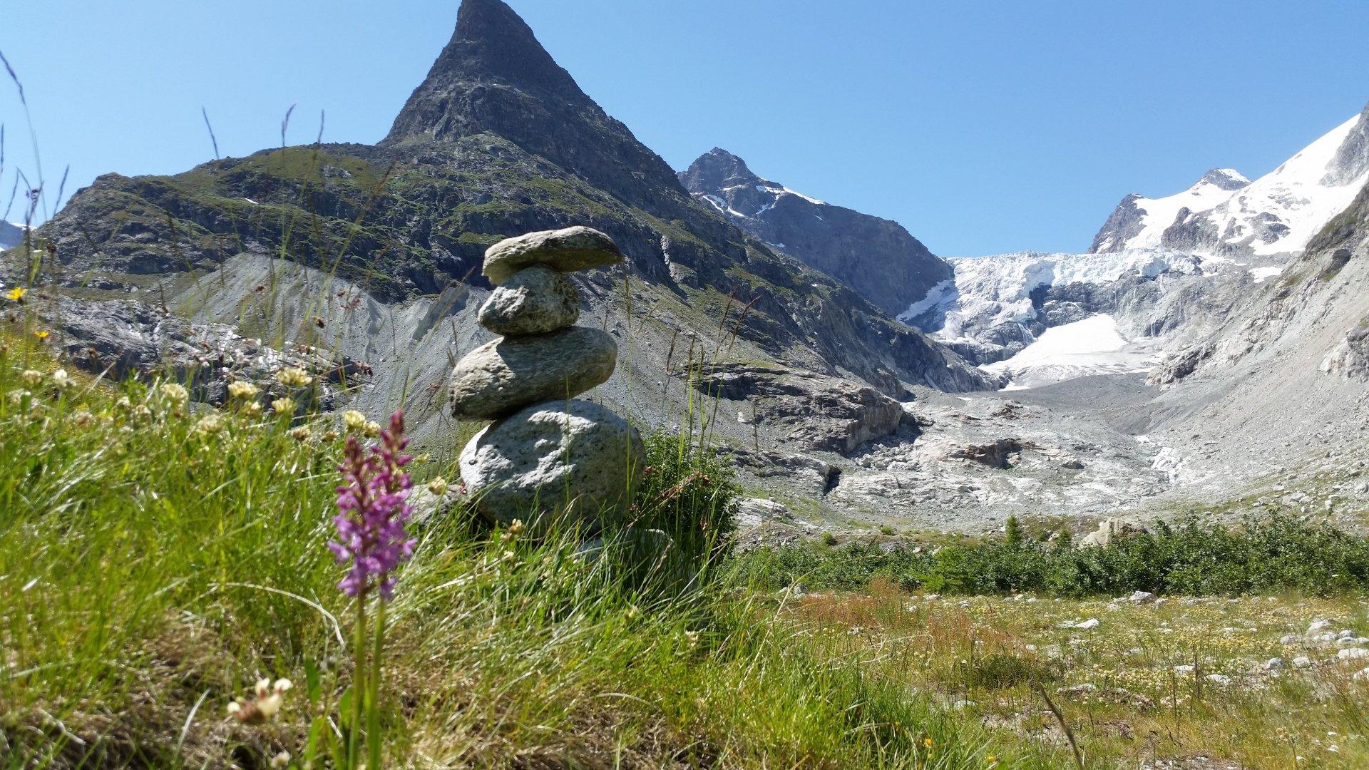 Vallon de Ferpècle : des glaciers et des plantes