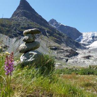 Vallon de Ferpècle: glaciers and plants