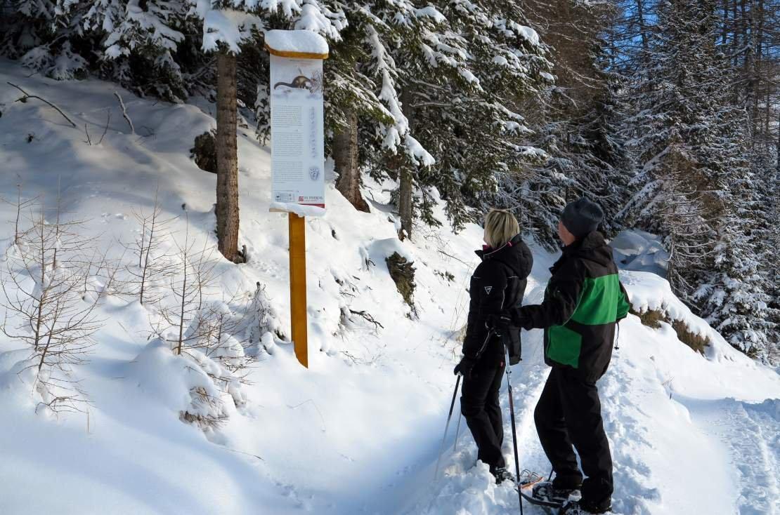 Animal tracks trail - Molignon to La Forclaz